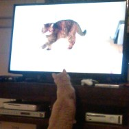 Watching Cat 101